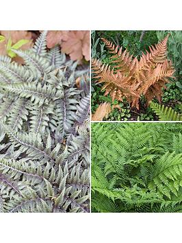 colourful-hardy-fern-collection-3-colours-in-9cm-pots