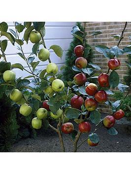 duo-apple-tree-2-varieites-on-1-tree-3l-pot-1m-tall