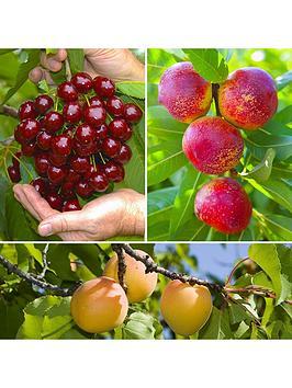 stone-fruit-orchard-3-trees-90cm-cherry-nectarine-apricot