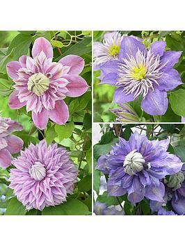 premium-double-flowered-clematis-collection-3-x-7cm-pots