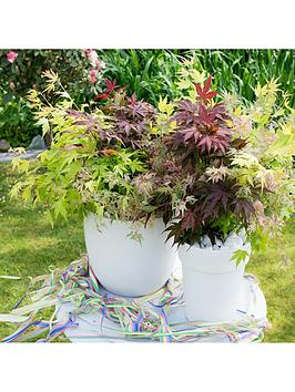 acer-festival-mix-3-colours-in-1