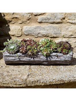 pre-planted-sempervivum-succulent-arrangement