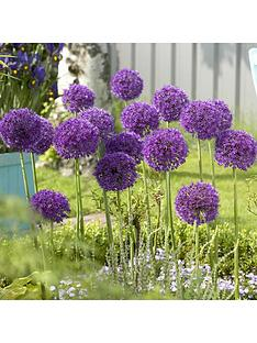 allium-purple-sensation-bulbs-x-35