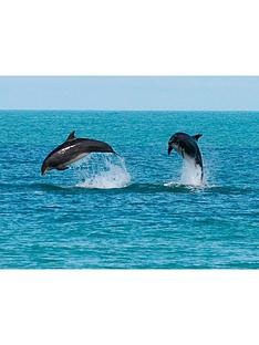 virgin-experience-days-dolphin-watching-for-twonbspin-ceredigion-wales