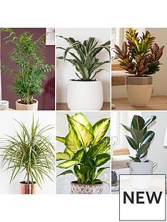 foliage-houseplant-mix-6-x-12cm