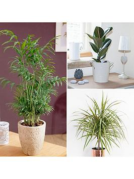 foliage-houseplant-mix-3-x-12cm