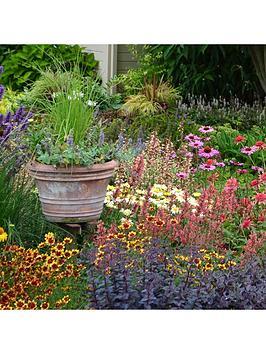 lucky-dip-perennial-12-plant-collection