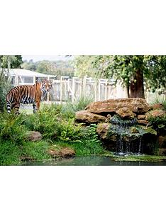 virgin-experience-days-up-close-tiger-encounter-for-two-at-woburn-safari-park-bedfordshire
