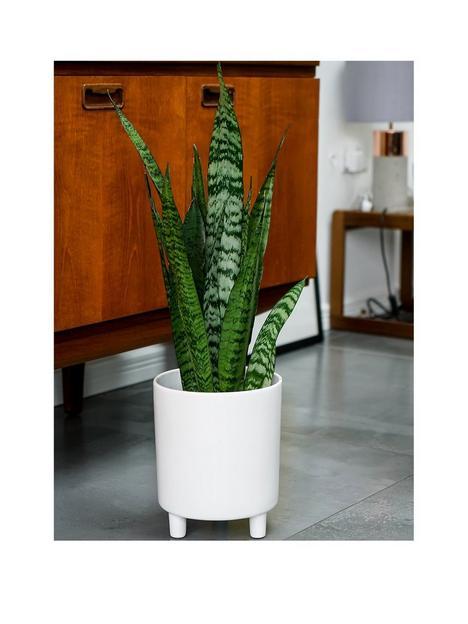ivyline-pisa-white-planter