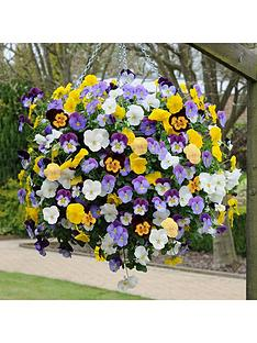 you-garden-pair-pansy-cool-wave-hanging-baskets-11