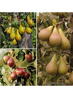 you-garden-three-variety-family-pear-tree-3l-potted