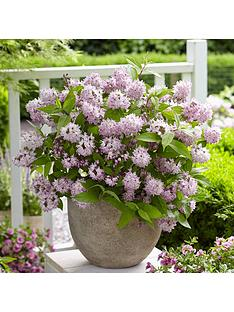 you-garden-deutzia-hybrida-rasberry-sundae-3l