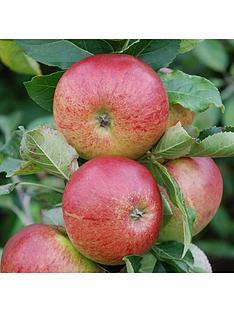 apple-gala-5l