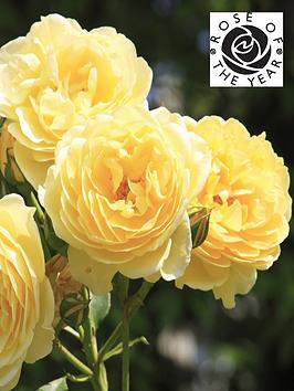 rose-belle-de-jour-roty-2021-3l