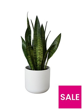ivyline-lisbon-white-planter-with-green-sansevieria-plant