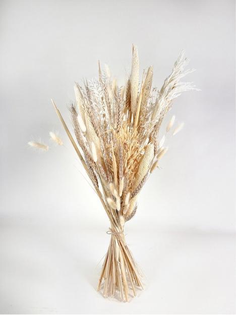 ixia-flowers-ixia-dried-flower-genevieve
