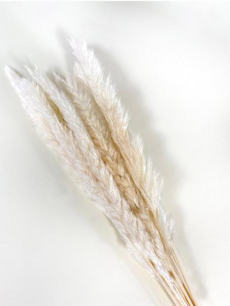 ixia-flowers-ixia-mini-pampas-grass-white-65cm-10-stems