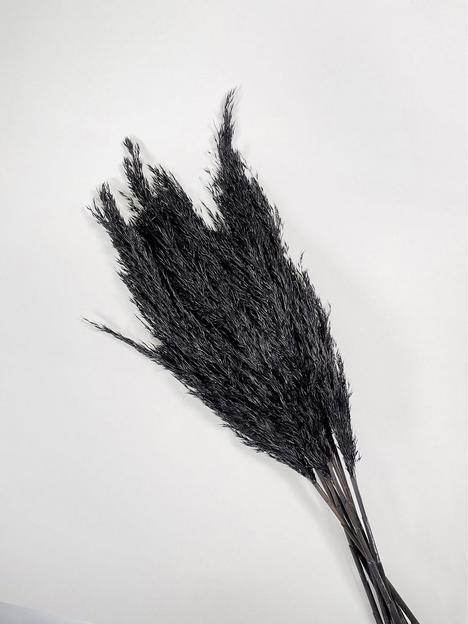 ixia-flowers-ixia-black-pampas-grass-wild-reed-plume-black-65cm-10-stems