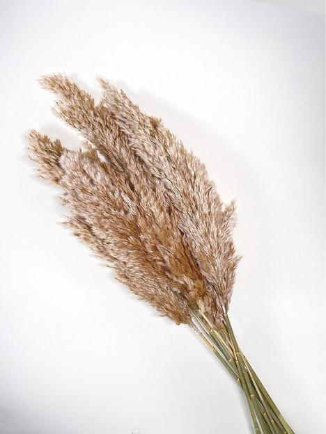 ixia-flowers-ixia-wild-reed-plume-vine-natural-pampas-grass-65cm-10-stems